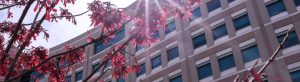 Decorative photo showing hospital building and tree with red leaves